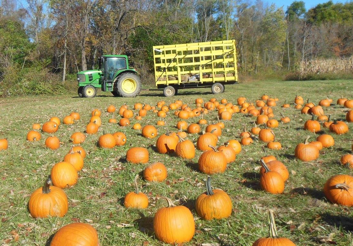 Wilcox Farms Fall Activities ...